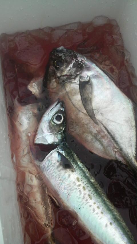 琵琶湖競輪&amp;<br />  お魚釣り